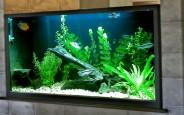 Nên chọn đèn led nào cho bể cá của gia đình bạn ?