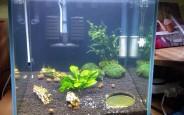 Công dụng của đèn led trang trí bể cá trong hồ thủy sinh tại nhà