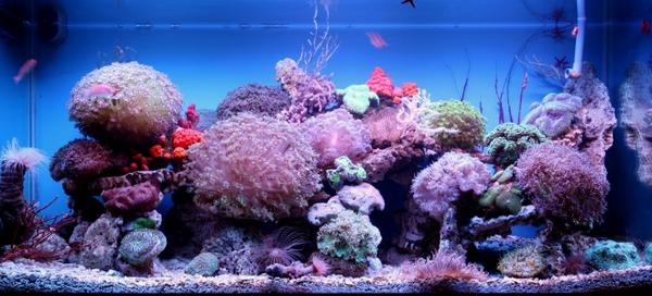 Mách nhỏ bí quyết sử dụng đèn led dây cho bể cá thêm phần sinh động