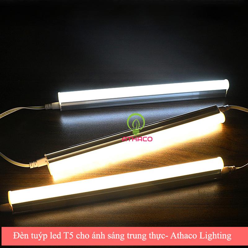 Các loại đèn led trang trí bể cá lý tưởng cho gia đình bạn